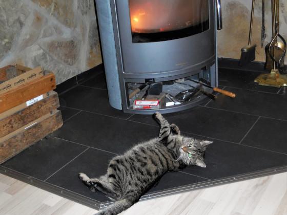 Meine Winterkatze