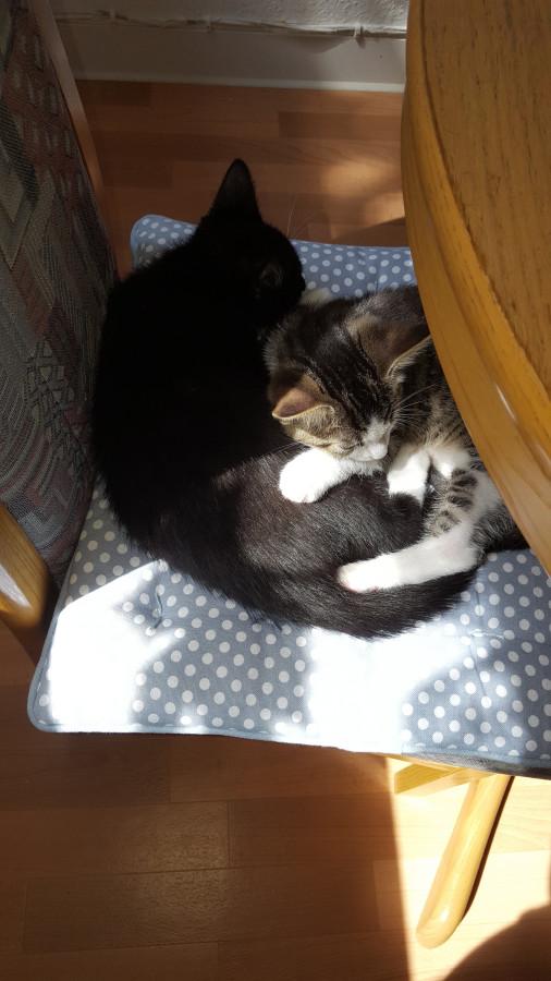 Mason und Kovu