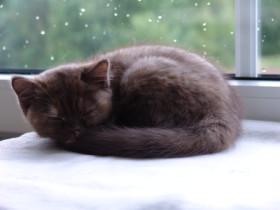 die katze in der winterzeit infos rund um die katze auf. Black Bedroom Furniture Sets. Home Design Ideas